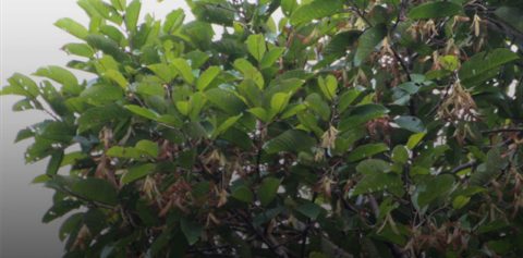 Wildlife of RER: Meranti Paya