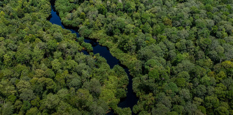 April Group Invests US$100 Million for Peat Restoration (Metro TV News)