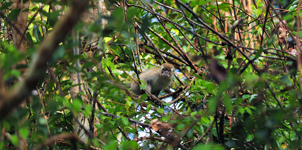 Biodiversity Survey and Monitoring
