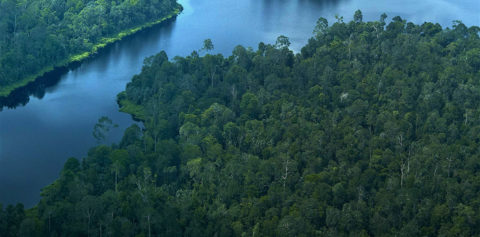 APRIL's $100m Environmental Conservation Plan Imperative for Future Business (Jakarta Globe)