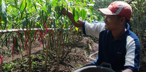 """Collaborative Efforts to Empower Communities in Pulau Padang to Practice """"No-Burn"""" Farming"""