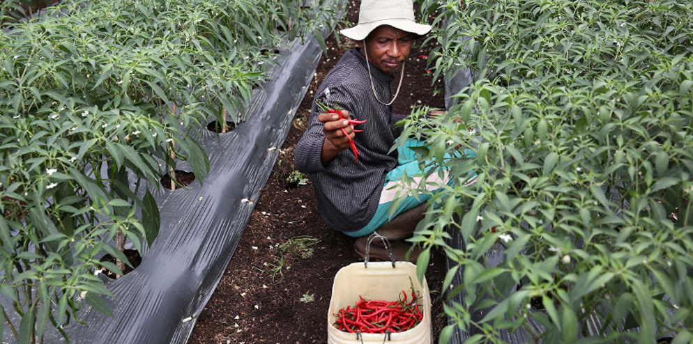 """Now, using the right way to clear land and plant chili has resulted in more benefits for me,"""