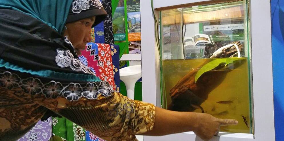 the Restorasi Ekosistem Riau (RER) team displayed peat swamp fishes such as Kryptopterus sp.