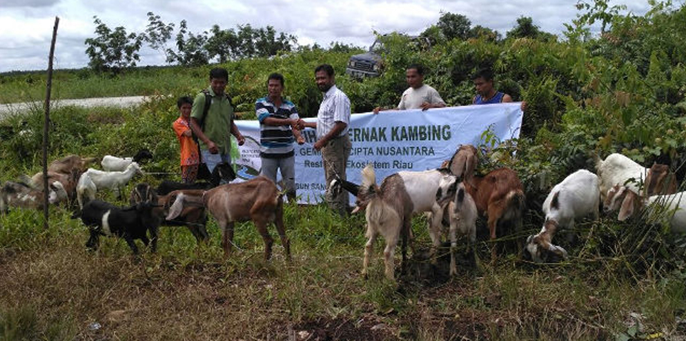 RER and their partner BIDARA have provided 50 goats to 40 resident families of Sangar sub-village in Pulau Muda Village.