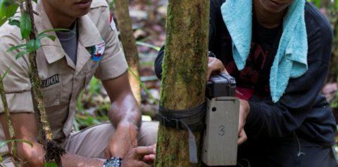 Caught on camera: camera traps in Pulau Padang