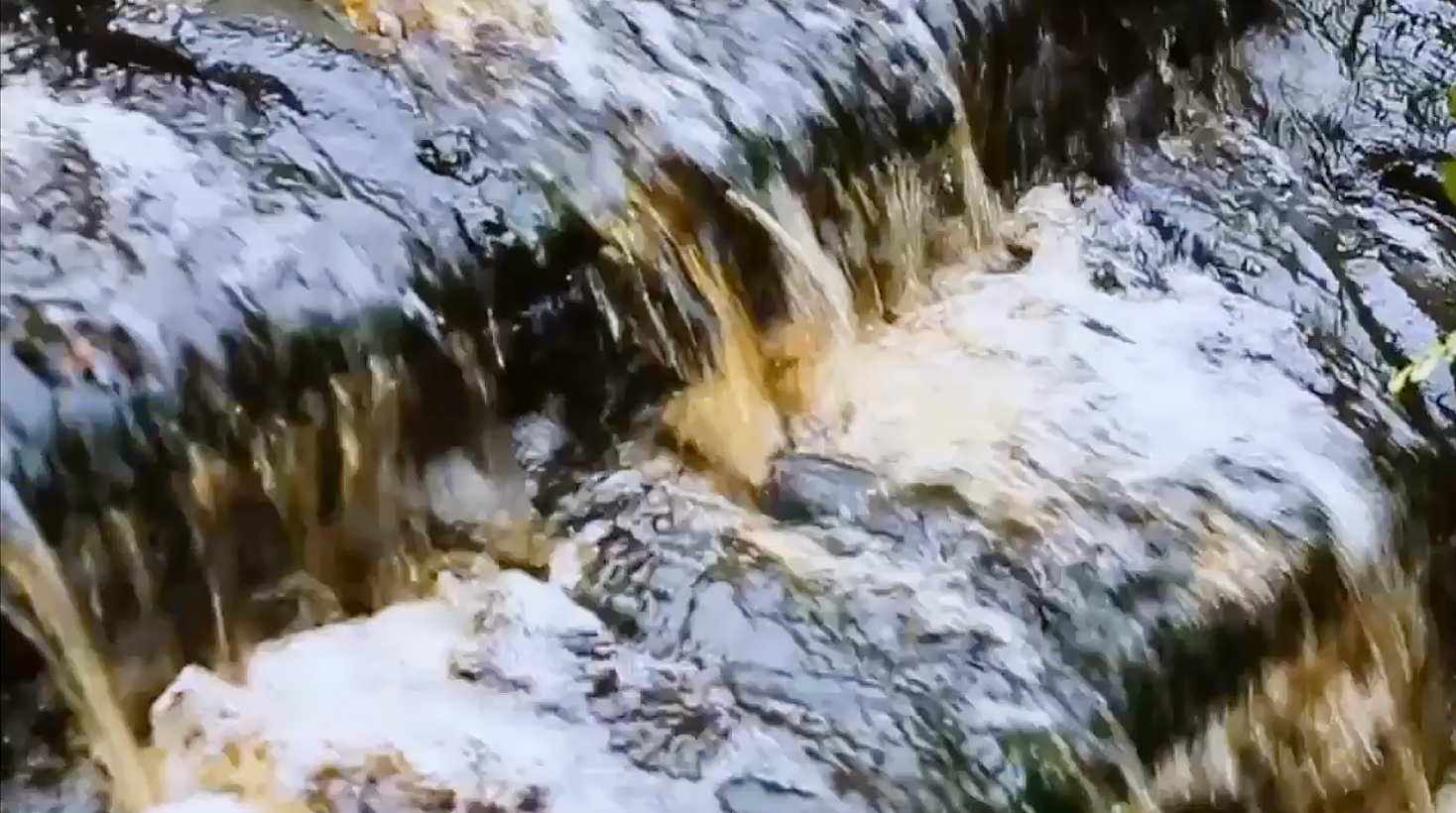 Peatland water color