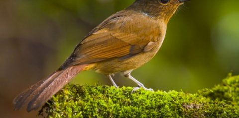 RER Records Six New Species In Past Year | RER Biodiversity