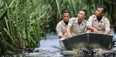 Pelindung Hutan | Pelestarian Lingkungan | Jagawana