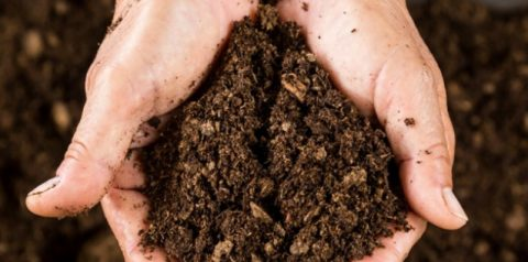 World Soil Day: What is Peat?