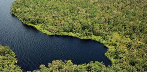 Amphibians & Reptiles of the Kampar Peninsula: an Annotated checklist