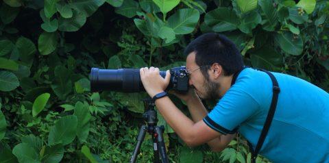 (Bahasa Indonesia) Ornitologi, Landasan Identifikasi Burung di RER