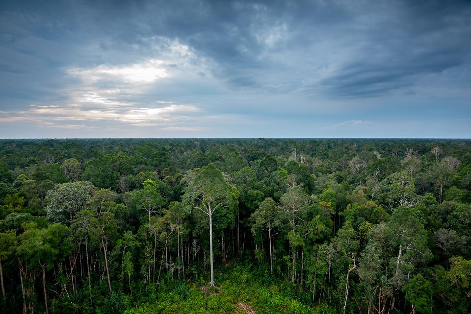 Hutan Restorasi Ekosistem Riau di provinsi Riau