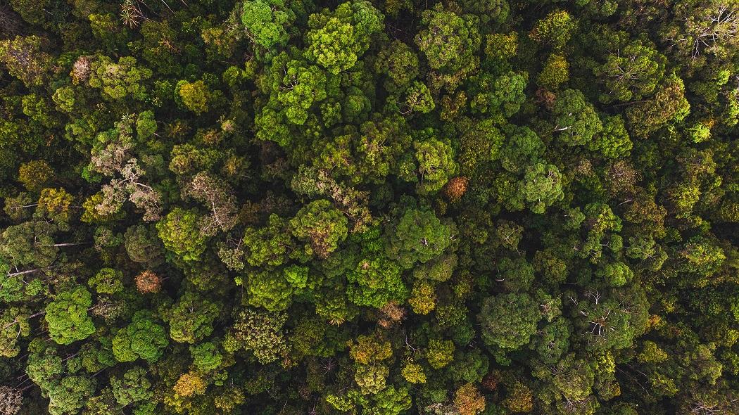 Hutan restorasi ekosistem riau di semenanjung kampar